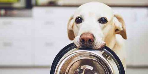 Global Pet Food Processor Improves Quality and Yield with GE Digital HMI/SCADA