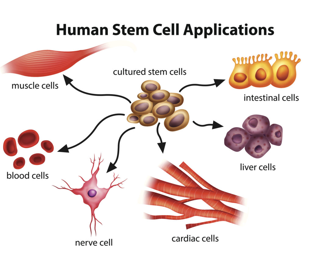 Human Stem Cell Applications on a white background