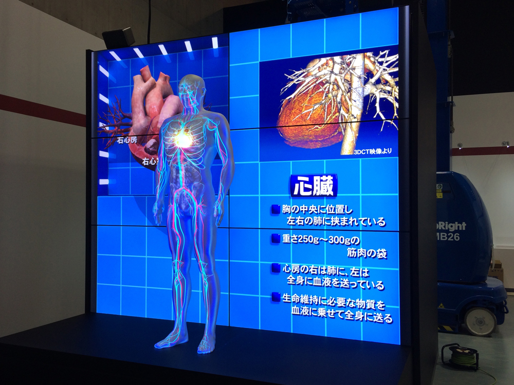 Projection mapping of Dr. Sugimoto's own internal organs to his 3D-printed body. Displayed at National Museum of Nature and Science, Tokyo. Courtesy Dr. Maki Sugimoto.