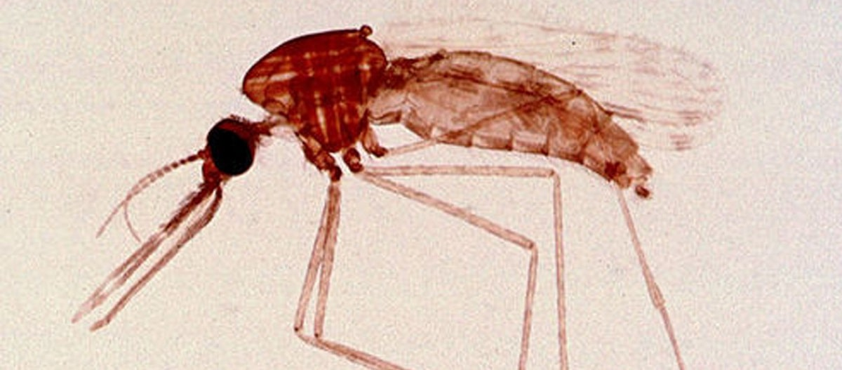 A Search & Destroy Mission: Scientists Seek a New Fast Way to Detect Malaria Parasites image
